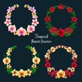 Τροπικές πλαίσια και ετικέττες λουλουδιών Στοκ Φωτογραφίες