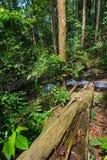 Τροπικές ρίζες δασικών δέντρων Στοκ Φωτογραφίες