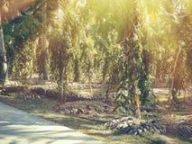 Τροπικές Σεϋχέλλες Ζαχαροκάλαμο στο Λα Digue thе στοκ εικόνα