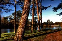 Τροπική άποψη λιμνών στοκ φωτογραφία με δικαίωμα ελεύθερης χρήσης