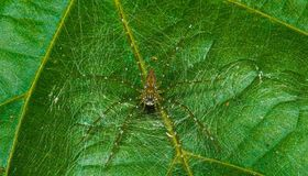 Τροπική αράχνη Στοκ εικόνες με δικαίωμα ελεύθερης χρήσης