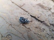 Τροπική αράχνη Στοκ Εικόνα