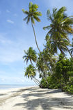 Τροπική βραζιλιάνα παραλία φοινίκων Στοκ φωτογραφία με δικαίωμα ελεύθερης χρήσης