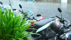 Τροπική βροχή σε Phuket φιλμ μικρού μήκους