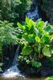 τροπική βλάστηση Στοκ εικόνες με δικαίωμα ελεύθερης χρήσης