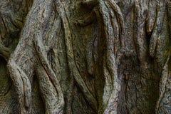τροπική βλάστηση Στοκ φωτογραφία με δικαίωμα ελεύθερης χρήσης