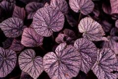 Τροπική δασική πυράκτωση φύλλων στη σκοτεινή μορφή καρδιών υποβάθρου fprm της όμορφης σύστασης αγάπης στοκ φωτογραφία με δικαίωμα ελεύθερης χρήσης