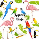 Τροπική διανυσματική απεικόνιση πουλιών ελεύθερη απεικόνιση δικαιώματος