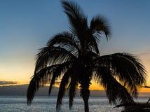 Τροπική δονούμενη σκιαγραφία ηλιοβασιλέματος βραδιού στοκ φωτογραφίες με δικαίωμα ελεύθερης χρήσης