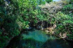 Τροπική εξωτική πράσινη ζούγκλα με μια μπλε λίμνη και καταρράκτης μια ηλιόλουστη ημέρα Στοκ Εικόνες