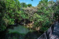 Τροπική εξωτική πράσινη ζούγκλα με μια μπλε λίμνη και καταρράκτης μια ηλιόλουστη ημέρα Στοκ εικόνες με δικαίωμα ελεύθερης χρήσης