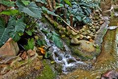 Τροπική ζούγκλα με τον ποταμό στοκ εικόνα