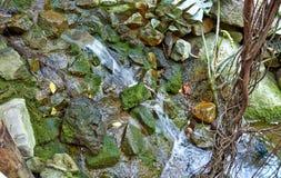 Τροπική ζούγκλα με τον ποταμό στοκ φωτογραφία με δικαίωμα ελεύθερης χρήσης