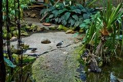 Τροπική ζούγκλα με τον ποταμό στοκ εικόνες