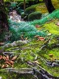 Τροπική ζούγκλα - εικόνα αποθεμάτων Στοκ Εικόνα