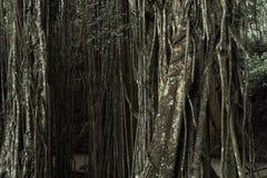 Τροπική ζούγκλα στο ιερό δασικό άδυτο πιθήκων, Ubud, Μπαλί, Ινδονησία Στοκ εικόνα με δικαίωμα ελεύθερης χρήσης