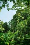 Τροπική ζούγκλα, τροπικό δάσος Στοκ Εικόνες