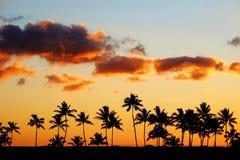 Τροπική ηλιοβασίλεμα ή ανατολή σκιαγραφιών φοινίκων Στοκ φωτογραφίες με δικαίωμα ελεύθερης χρήσης