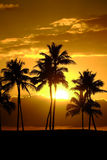 Τροπική ηλιοβασίλεμα ή ανατολή σκιαγραφιών φοινίκων Στοκ Φωτογραφίες