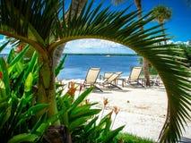 Τροπική διάταξη θέσεων σε μια παραλία που πλαισιώνεται από έναν λεπτομερή πράσινο φοίνικα/ένα τροπικό δέντρο Στοκ Εικόνα