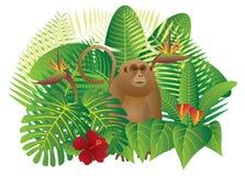 Τροπική διανυσματική απεικόνιση πιθήκων ζουγκλών τροπικών δασών διανυσματική απεικόνιση