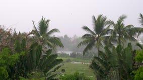 Τροπική καταιγίδα ή καταιγίδα σε ένα πράσινο περιβάλλον ζουγκλών με τους φοίνικες απόθεμα βίντεο