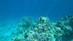 Τροπική κοραλλιογενής ύφαλος στη Ερυθρά Θάλασσα φιλμ μικρού μήκους