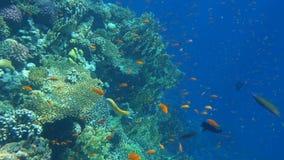 Τροπική κοραλλιογενής ύφαλος Υποβρύχια ψάρια σε Ras Μωάμεθ, Sheikh Sharm EL, Αίγυπτος απόθεμα βίντεο