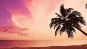 Τροπική παραλία ηλιοβασιλέματος φύσης Κόκκινος φοίνικας σύννεφων ουρανού πορτοκαλής πέρα από τη θάλασσα Παραλία νησιών Ινδικού Ωκ απόθεμα βίντεο