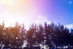 Τροπική παραλία, θερινή παραλία, τοπίο παραλιών, νεφελώδης ουρανός στοκ εικόνα με δικαίωμα ελεύθερης χρήσης