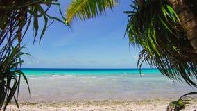 Τροπική παραλία με τα cocopalms στη γαλλική Πολυνησία απόθεμα βίντεο