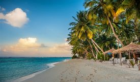 Τροπική παραλία στις Μαλδίβες Τροπικός παράδεισος στις Μαλδίβες με τους φοίνικες στοκ φωτογραφία