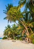 Τροπική παραλία στις Μαλδίβες Τροπικός παράδεισος στις Μαλδίβες με τους φοίνικες στοκ εικόνα με δικαίωμα ελεύθερης χρήσης