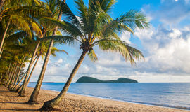 Τροπική παραλία με τους φοίνικες Στοκ εικόνες με δικαίωμα ελεύθερης χρήσης