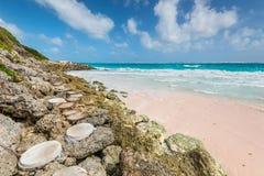 Τροπική παραλία στην παραλία γερανών νησιών Καραϊβικής, Μπαρμπάντος Στοκ φωτογραφίες με δικαίωμα ελεύθερης χρήσης
