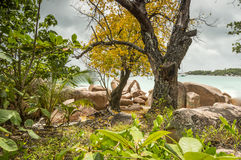 Τροπική παραλία στις Σεϋχέλλες - υπόβαθρο φύσης Στοκ φωτογραφία με δικαίωμα ελεύθερης χρήσης