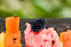 Τροπική πεταλούδα Στοκ φωτογραφίες με δικαίωμα ελεύθερης χρήσης