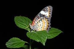 Τροπική πεταλούδα Στοκ εικόνες με δικαίωμα ελεύθερης χρήσης