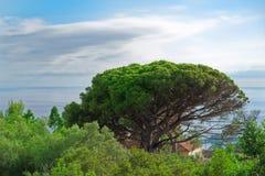 Τροπική σκηνή φύσης ενός δέντρου ενάντια στο νεφελώδη ουρανό Νησί της Μαδέρας στοκ φωτογραφία