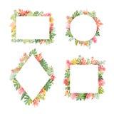 Τροπική συλλογή πλαισίων πουλιών λουλουδιών και φλαμίγκο ελεύθερη απεικόνιση δικαιώματος