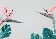 Τροπική σύνθεση με το πουλί του παραδείσου και των φύλλων στο ροζ στοκ εικόνα με δικαίωμα ελεύθερης χρήσης