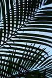 Τροπική σύσταση φύλλων φοινικών με τον μπλε σαφή ουρανό στην κατακόρυφο στοκ φωτογραφία με δικαίωμα ελεύθερης χρήσης