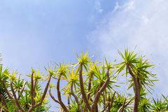 Τροπικοί εγκαταστάσεις και ουρανός Ηλιόλουστη ημέρα στο τροπικό νησί Πρότυπο εμβλημάτων καλοκαιρινών διακοπών Στοκ Εικόνες