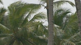Τροπικοί θάμνοι φοινικών το απόγευμα στο νησί απόθεμα βίντεο