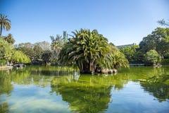 Τροπικοί κήπος, λίμνη και φοίνικας στη Βαρκελώνη, Ισπανία στοκ φωτογραφία με δικαίωμα ελεύθερης χρήσης