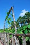 τροπικοί κύκλοι κήπων στοκ φωτογραφία με δικαίωμα ελεύθερης χρήσης