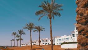 Τροπικοί φοίνικες ενάντια στον ουρανό και το ξενοδοχείο στην Αίγυπτο Ξενοδοχείο εξωτερικό σε μια τροπική χώρα φιλμ μικρού μήκους