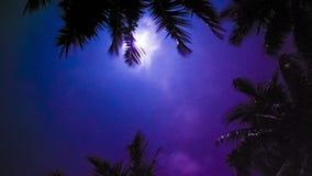 Τροπικοί φοίνικες νύχτας απόθεμα βίντεο