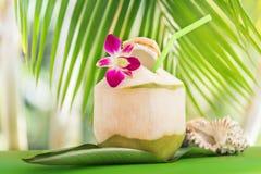 Τροπικός εξωτικός πράσινος χυμός νερού καρύδων κοντά στο φοίνικα με το ο στοκ εικόνα με δικαίωμα ελεύθερης χρήσης
