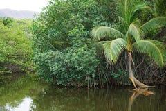 Τροπικός εσωτερικός ποταμός, Κόστα Ρίκα Στοκ Φωτογραφία
